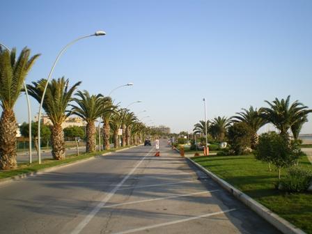 Punteruolo rosso: piano di prevenzione a Civitanova Marche
