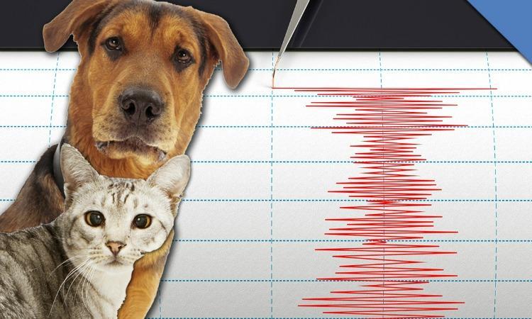 Recapiti del presidio veterinario per la sicurezza animale e alimentare