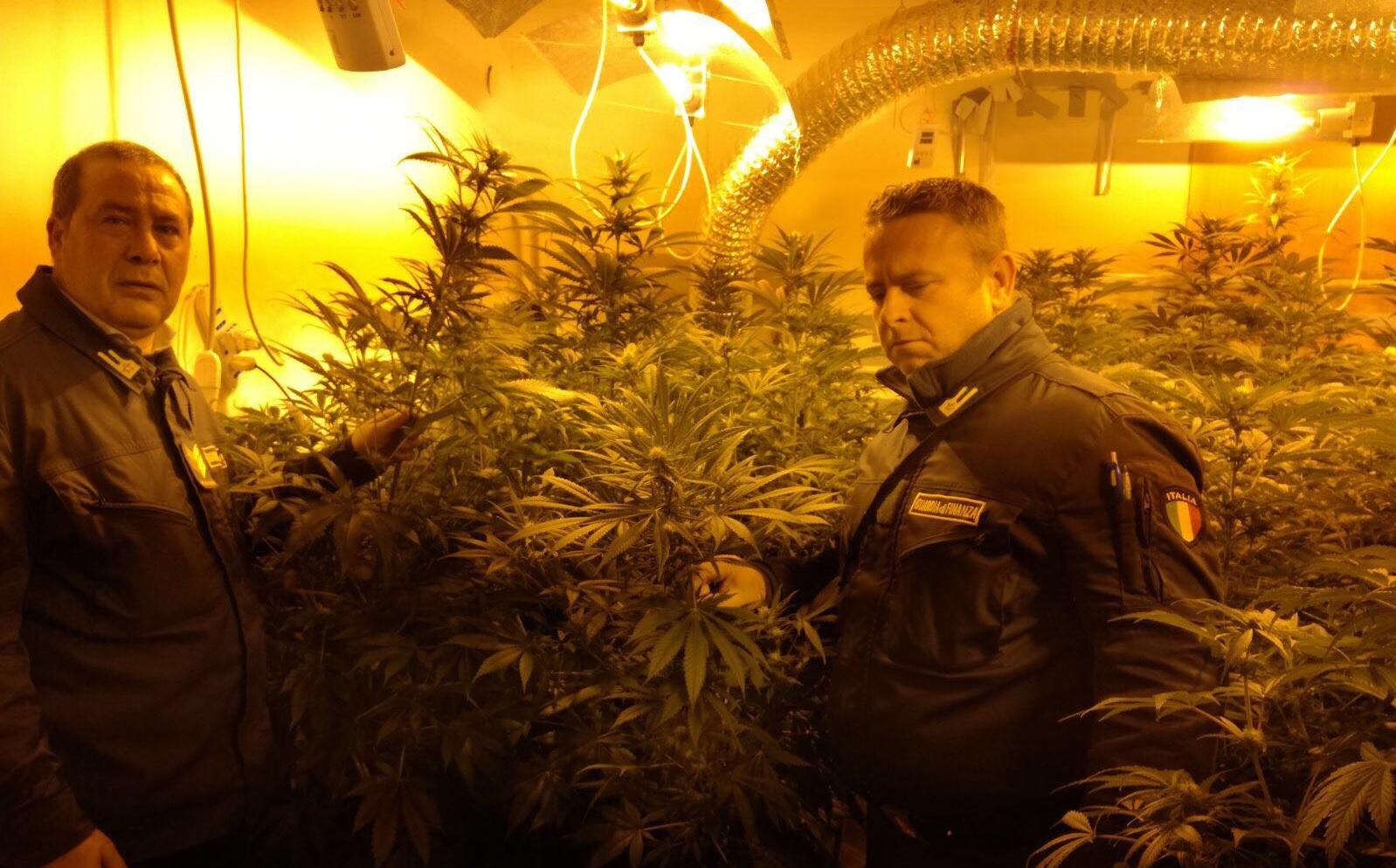 Piantagione di marijuana scoperta in un casolare dalla Finanza