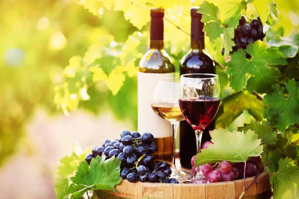 Regione, contributi per investimenti nel settore vitivinicolo
