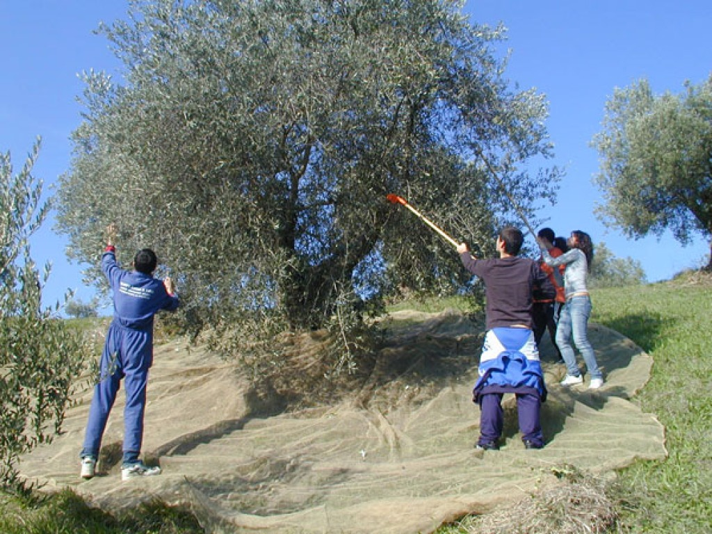 L'Istituto Agrario di Macerata protagonista a Linea Verde su Rai1