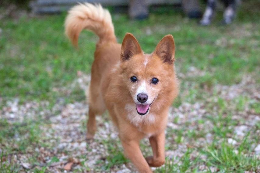 Treia, funziona l'adozione dei cani con il contributo