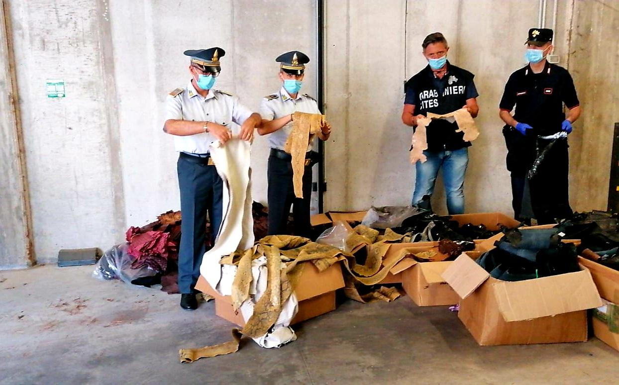 Guardia di Finanza, sequestrate pelli di animali protetti