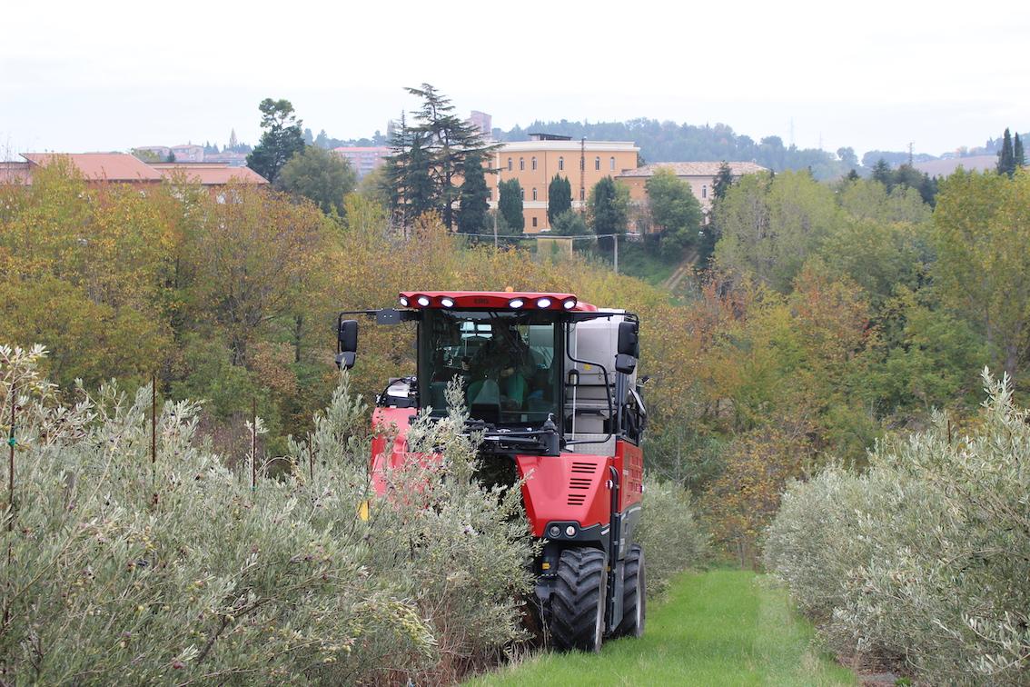 Istituto Agrario di Macerata, raccolta innovativa delle olive