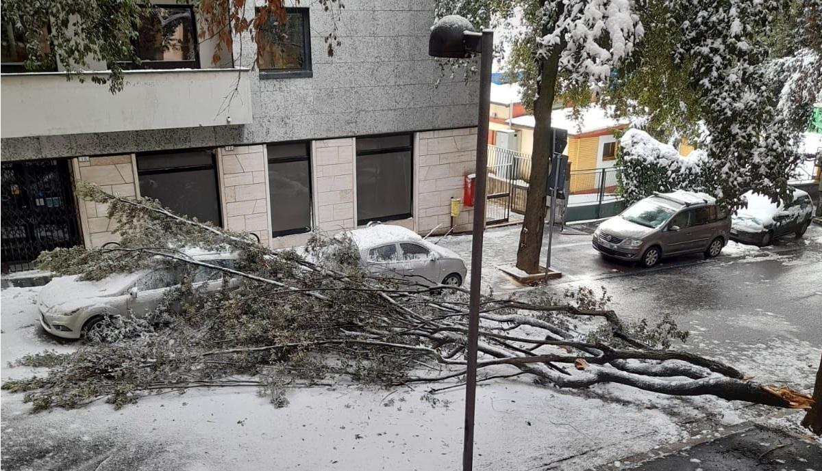 Macerata, ramo cade per la neve in via Dante e blocca il traffico