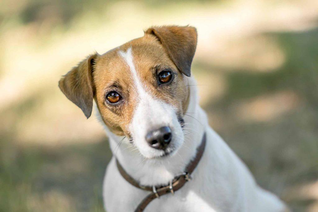 Treia, continua con successo il progetto per adottare cani